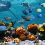 Bahamas Yacht Charters and Snorkeling